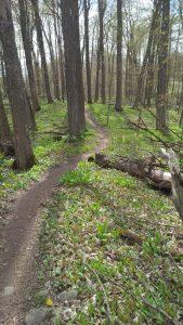 Trail_1