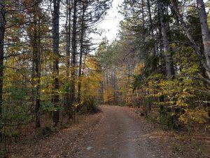 marlboroughforest