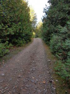 marlboroughforest2